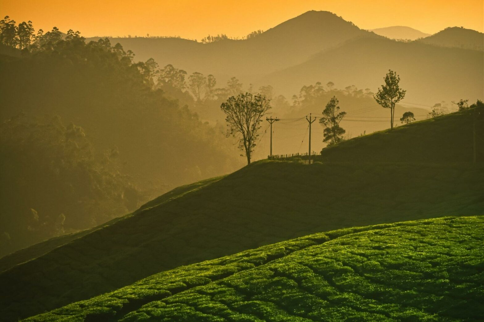 Best Hill Stations to visit in South India