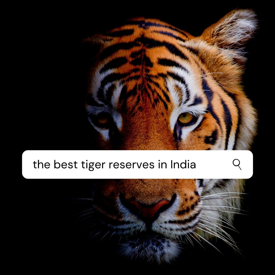 Best Tiger Reserves in India