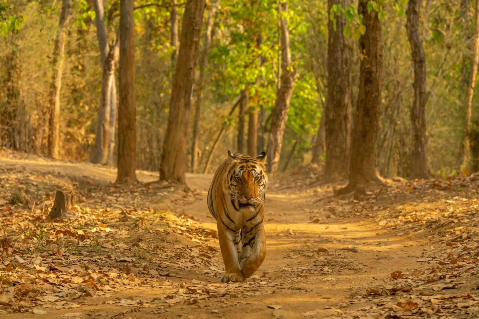 Top Tiger Reserves of India